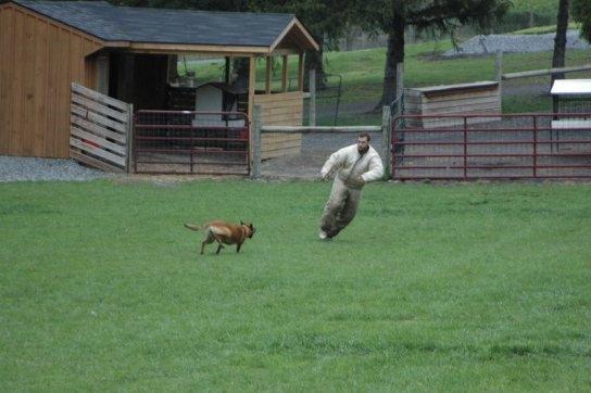 Syracuse Dog Obedience Training Club